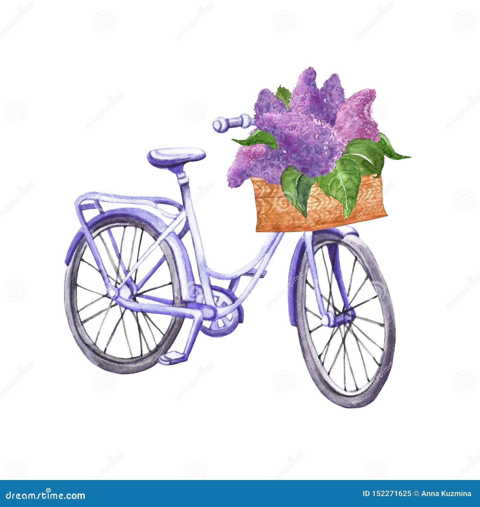För tappningcykel för vattenfärg pastellfärgad blå illustration Utdragen strandkryssare för hand med korgen och purpurfärgade lil