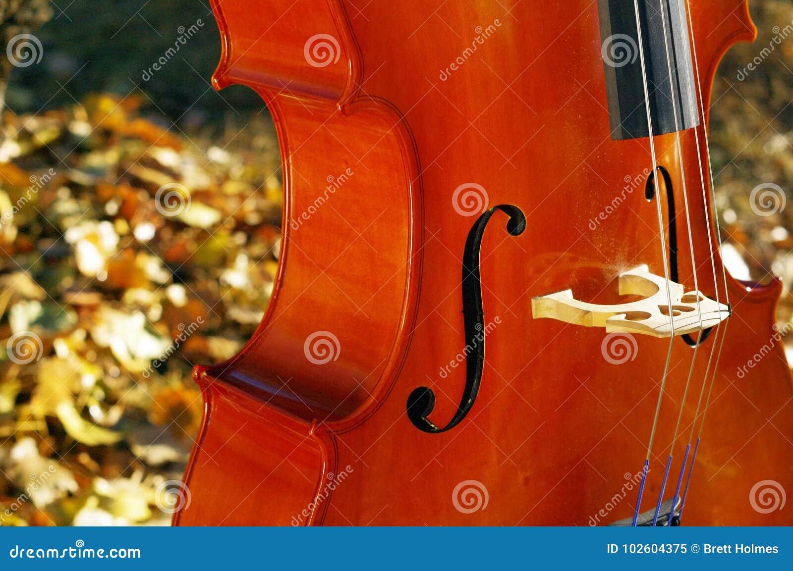 För violoncell closeup utomhus i parkera i nedgånghöstdag med colou