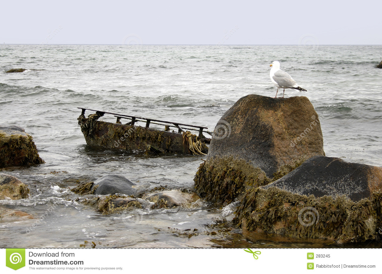 Förbise seagullhaverit