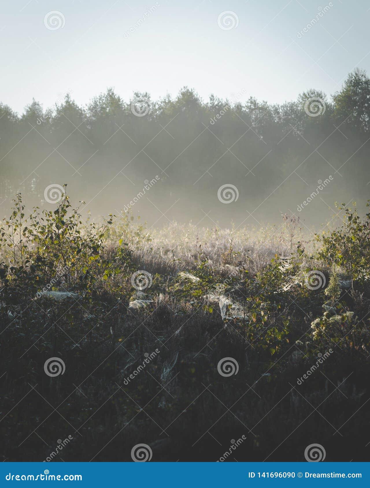 Fördunkla stigning upp från växter på jordningen i ottasolsken