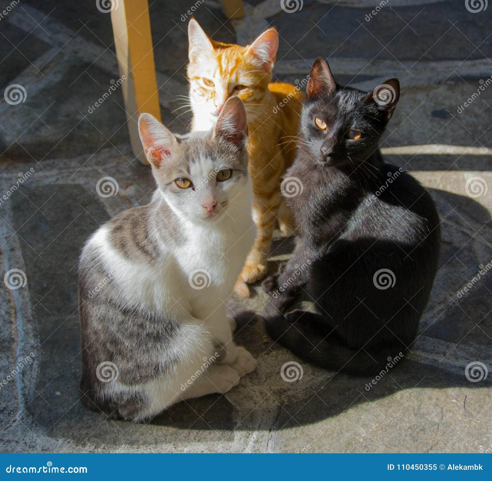 Företaget för katt` s i solen