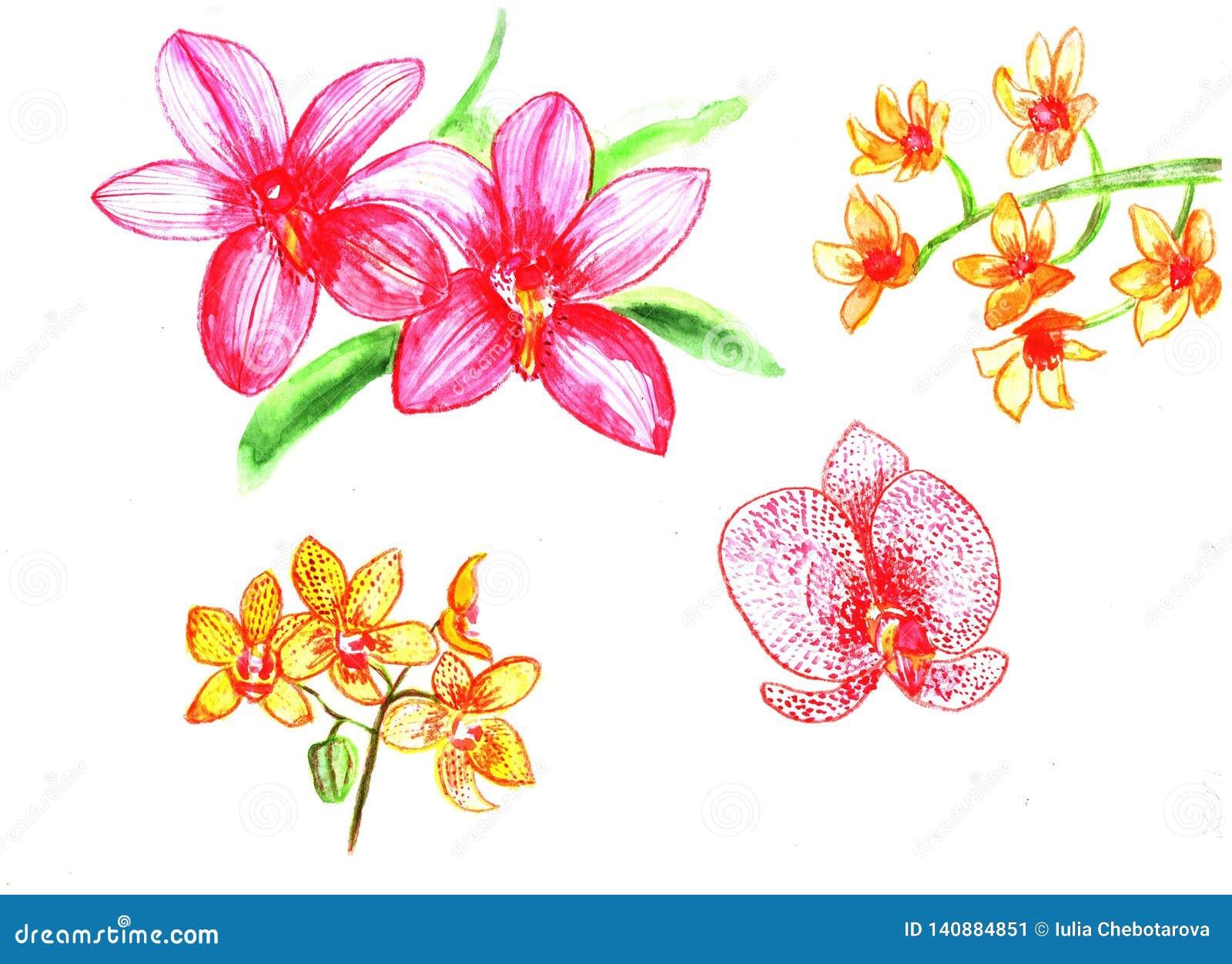 Författare blommar set vattenfärg för I-målningsbild Orkidé