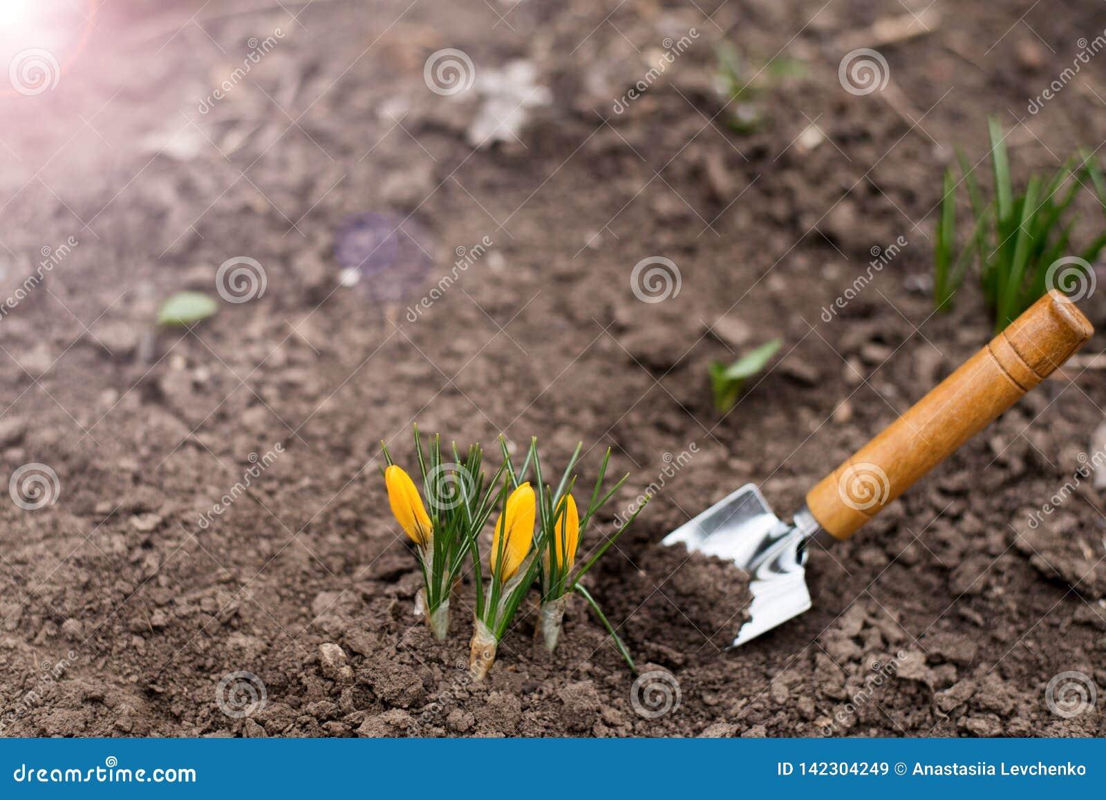 Första vårforsar placera text kopiera avstånd arbeta i trädgården för begrepp Vår mot bakgrund field blåa oklarheter för grön vit