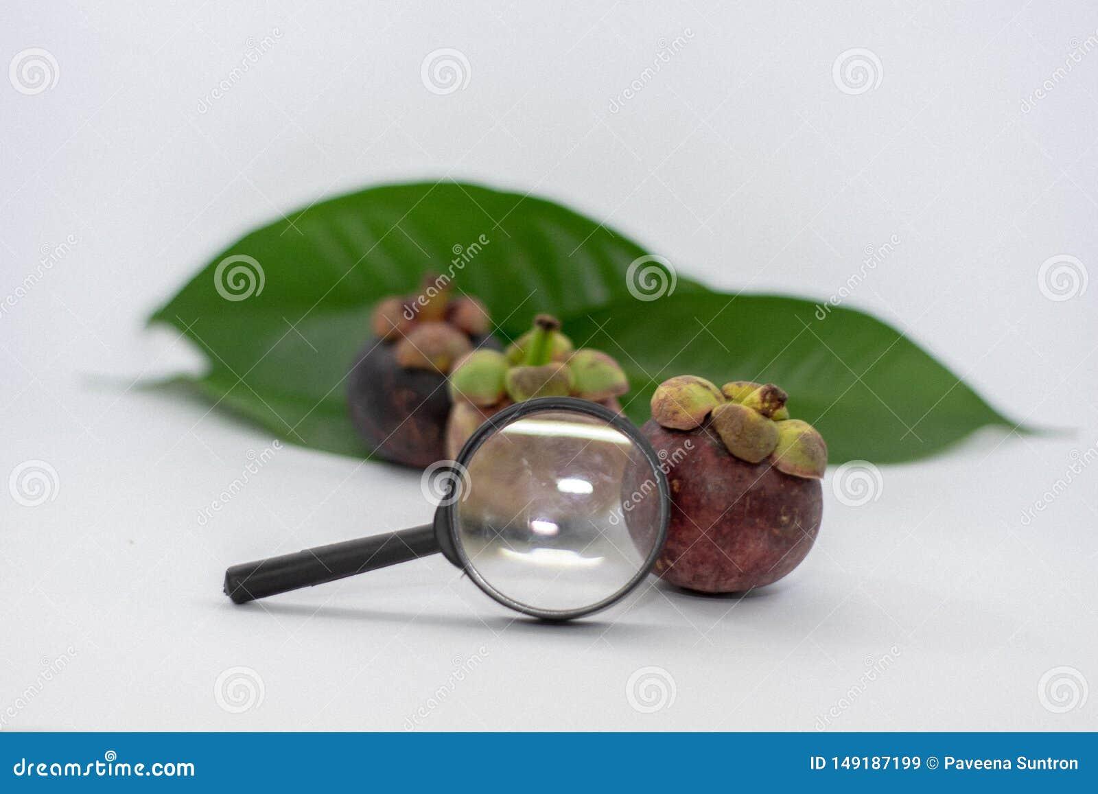 F?rstoringsglas mangosteensidor, vit bakgrund