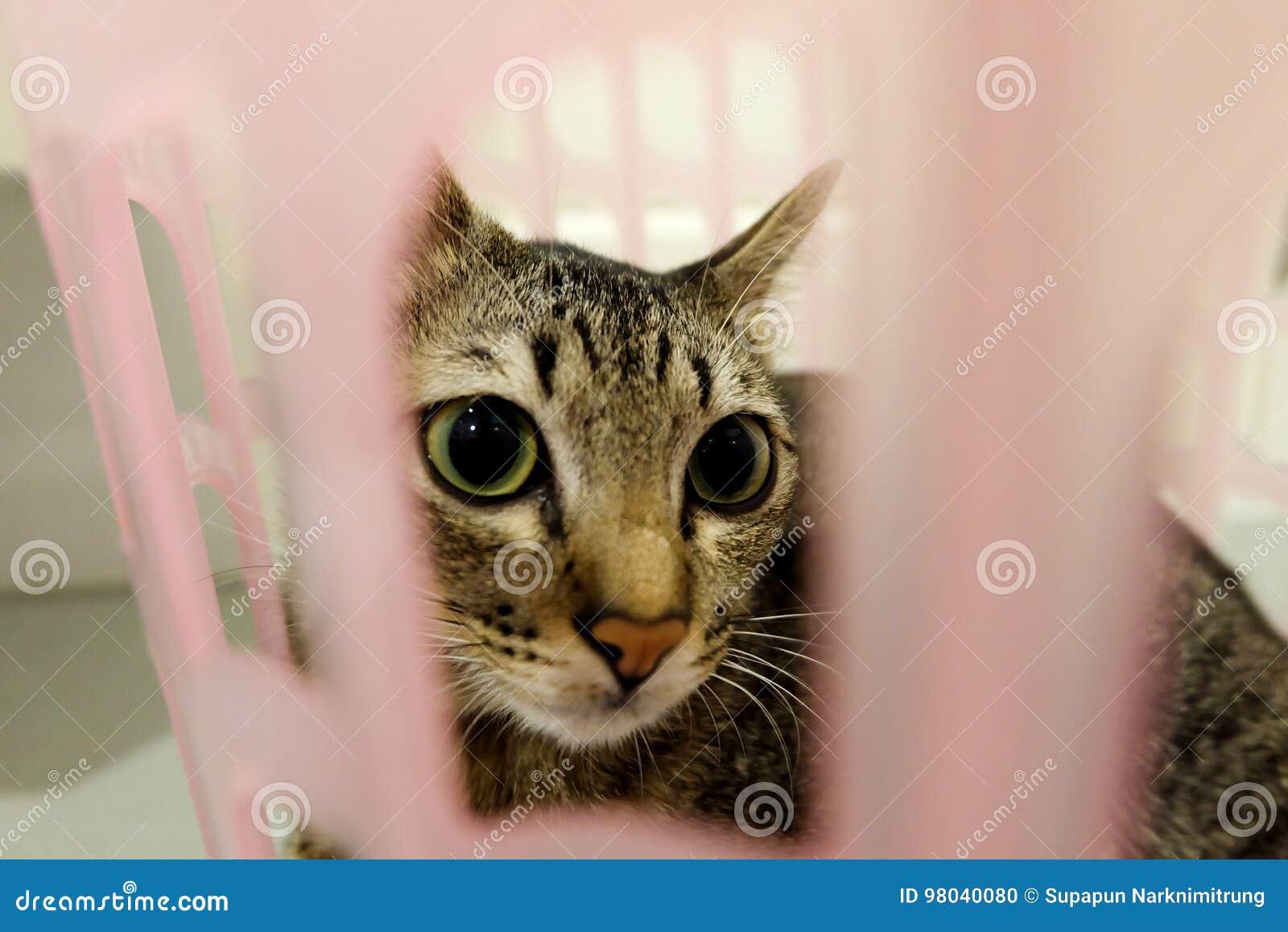Förtjusande katt som ligger i korg Älskvärda gulliga kattungar hemma