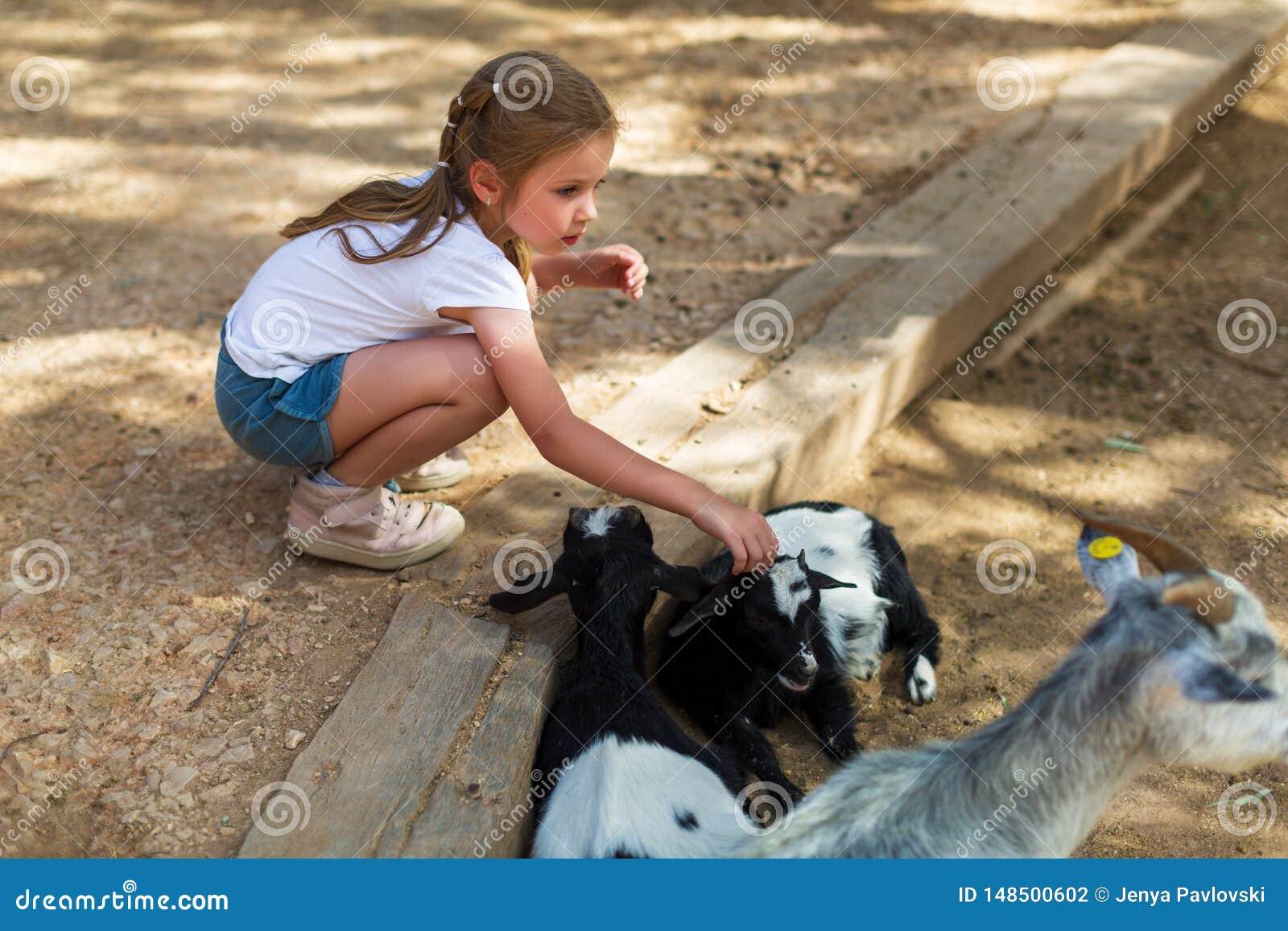 F?rtjusande liten flicka med sm? getter p? zoo