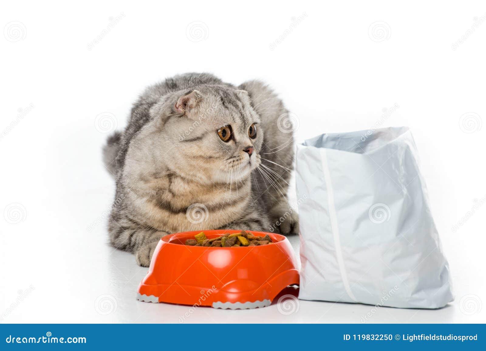 Förtjusande päls- katt som ligger nära bunken och packe av kattmat på vit