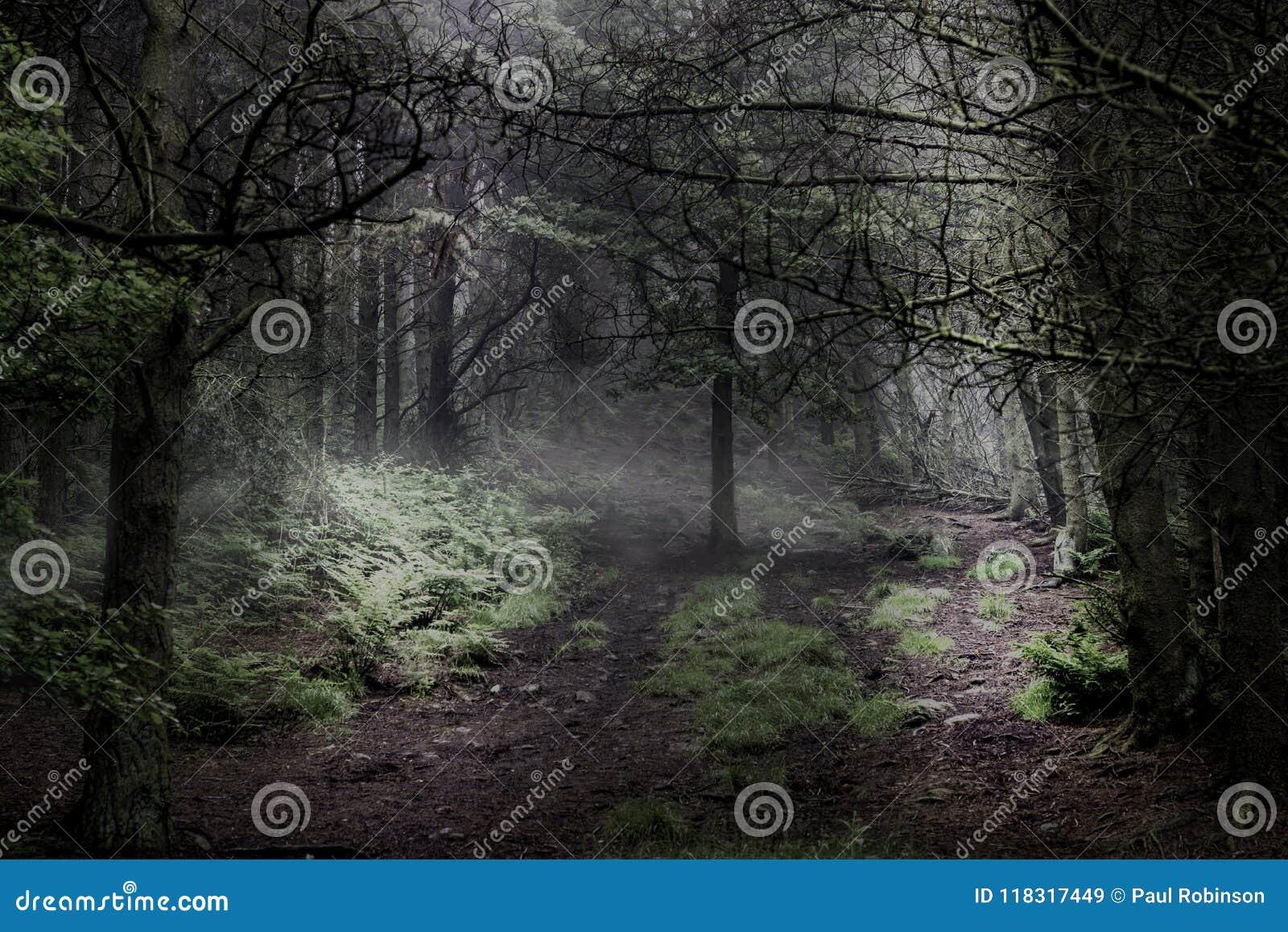 Förtrollad magisk skog