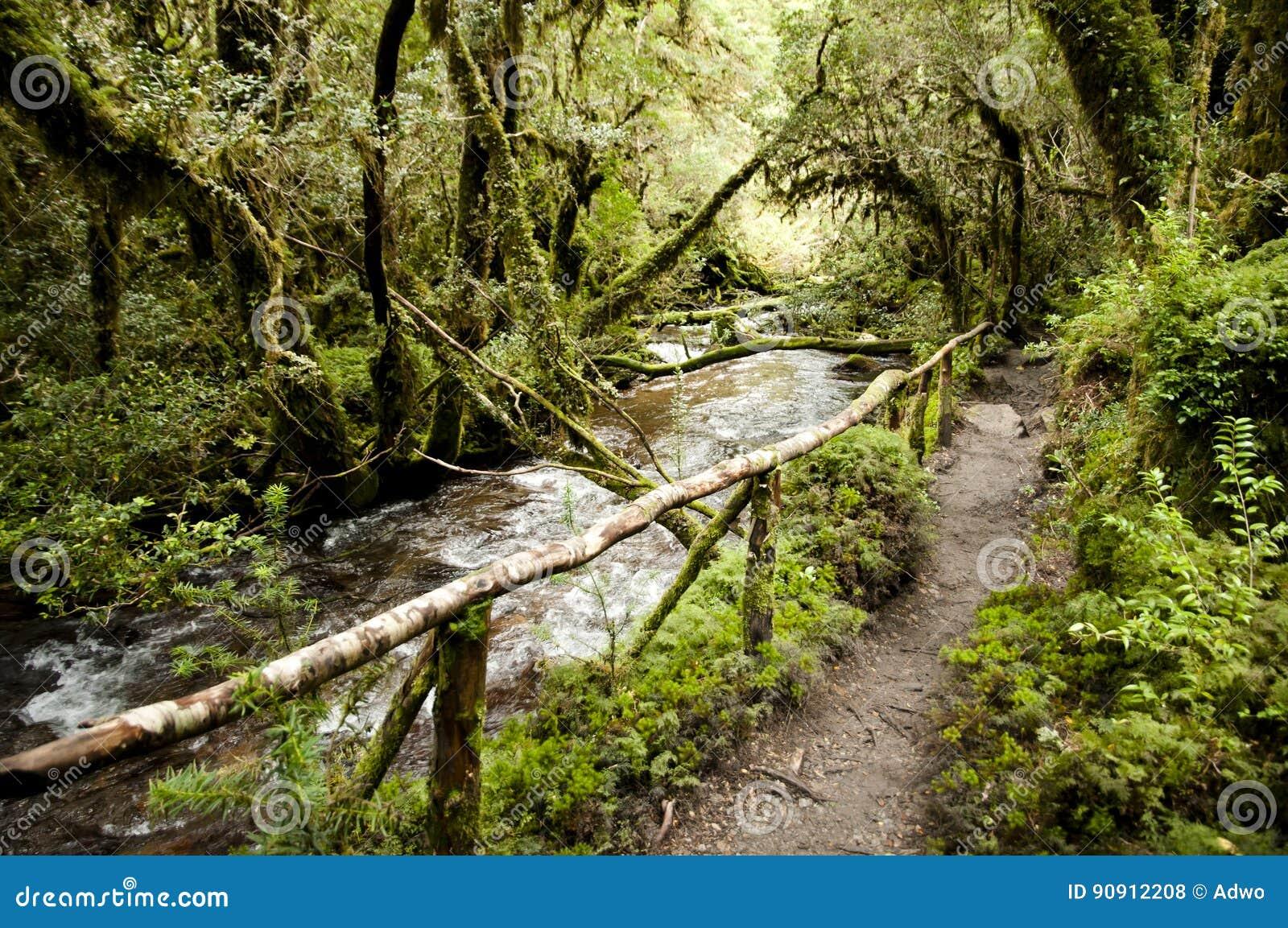 Förtrollad skog - den Queulat nationalparken - Chile