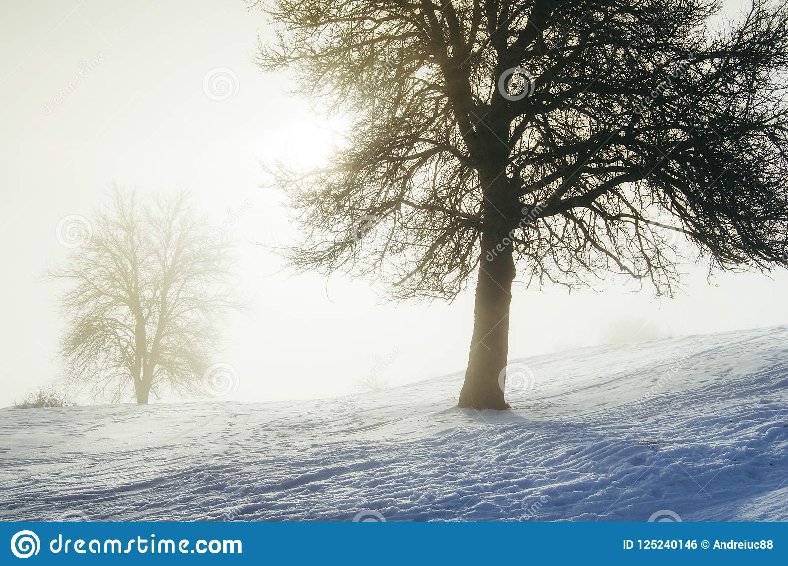 Förtrollad vintermorgon med snö och magiskt ljus till och med träd