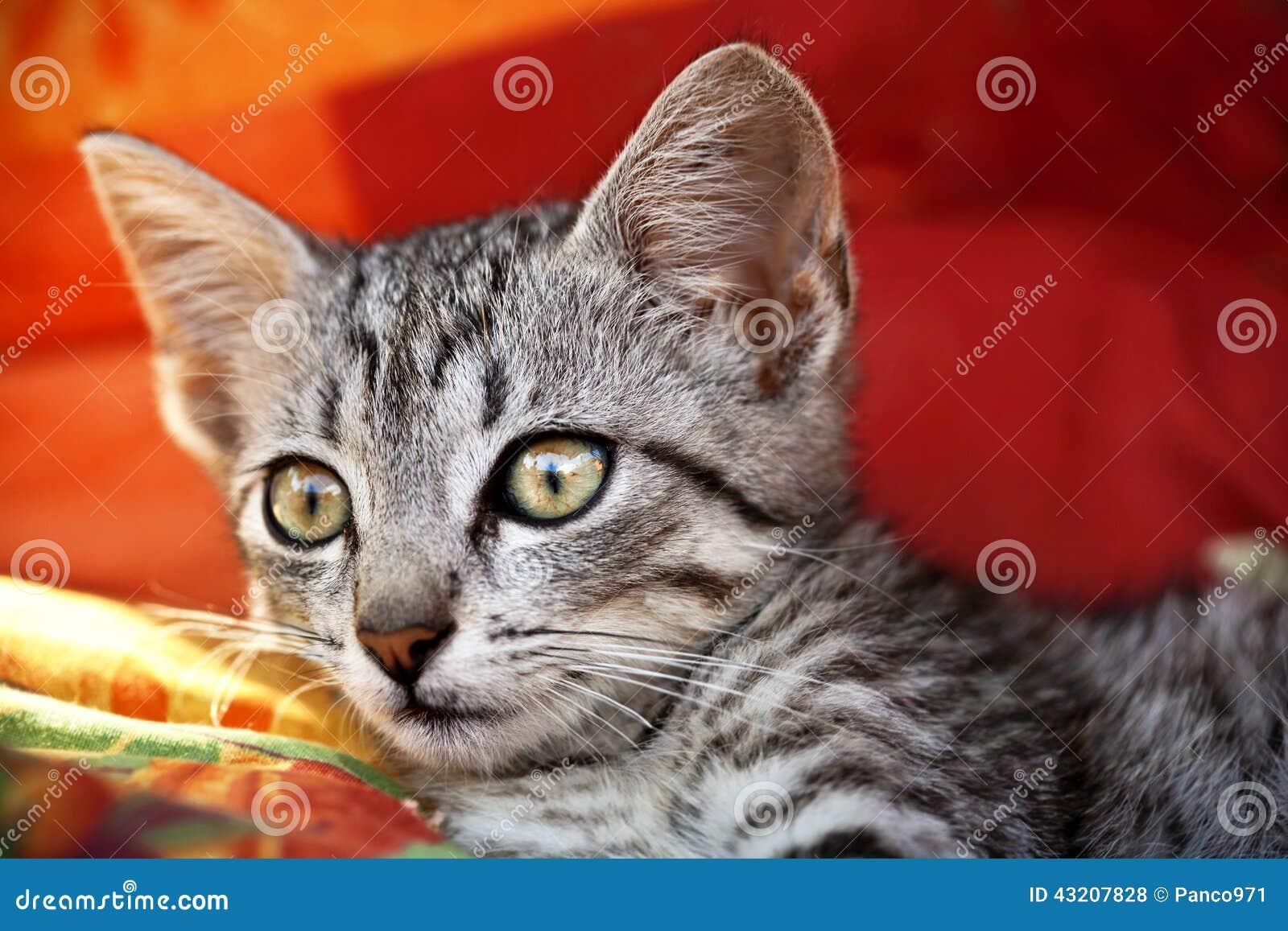 Download Förvånad katt arkivfoto. Bild av kattunge, skämtsamt - 43207828