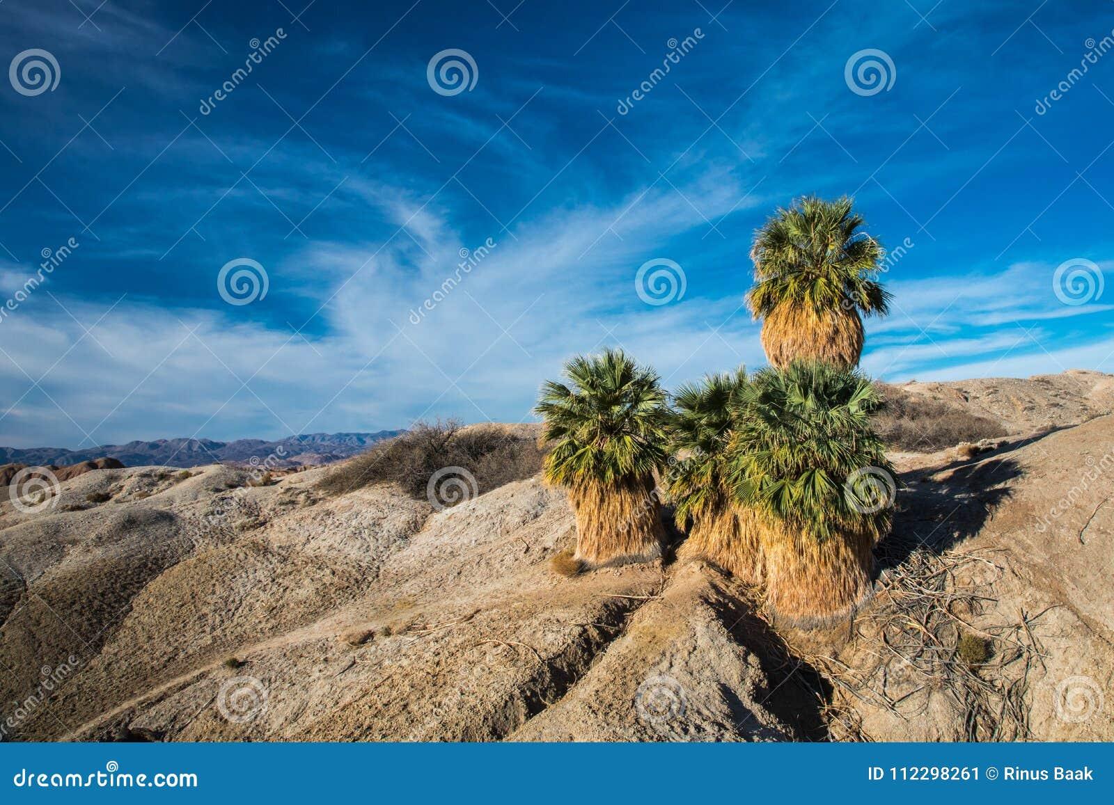Fünf Palmen