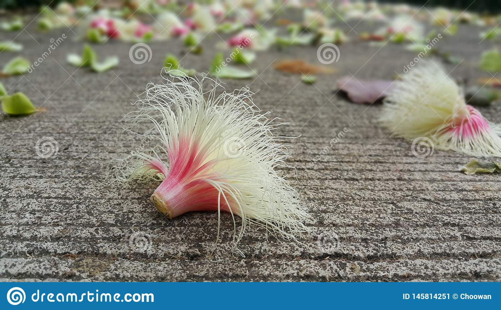 F?rsommar kommer med sk?nhet till blommor