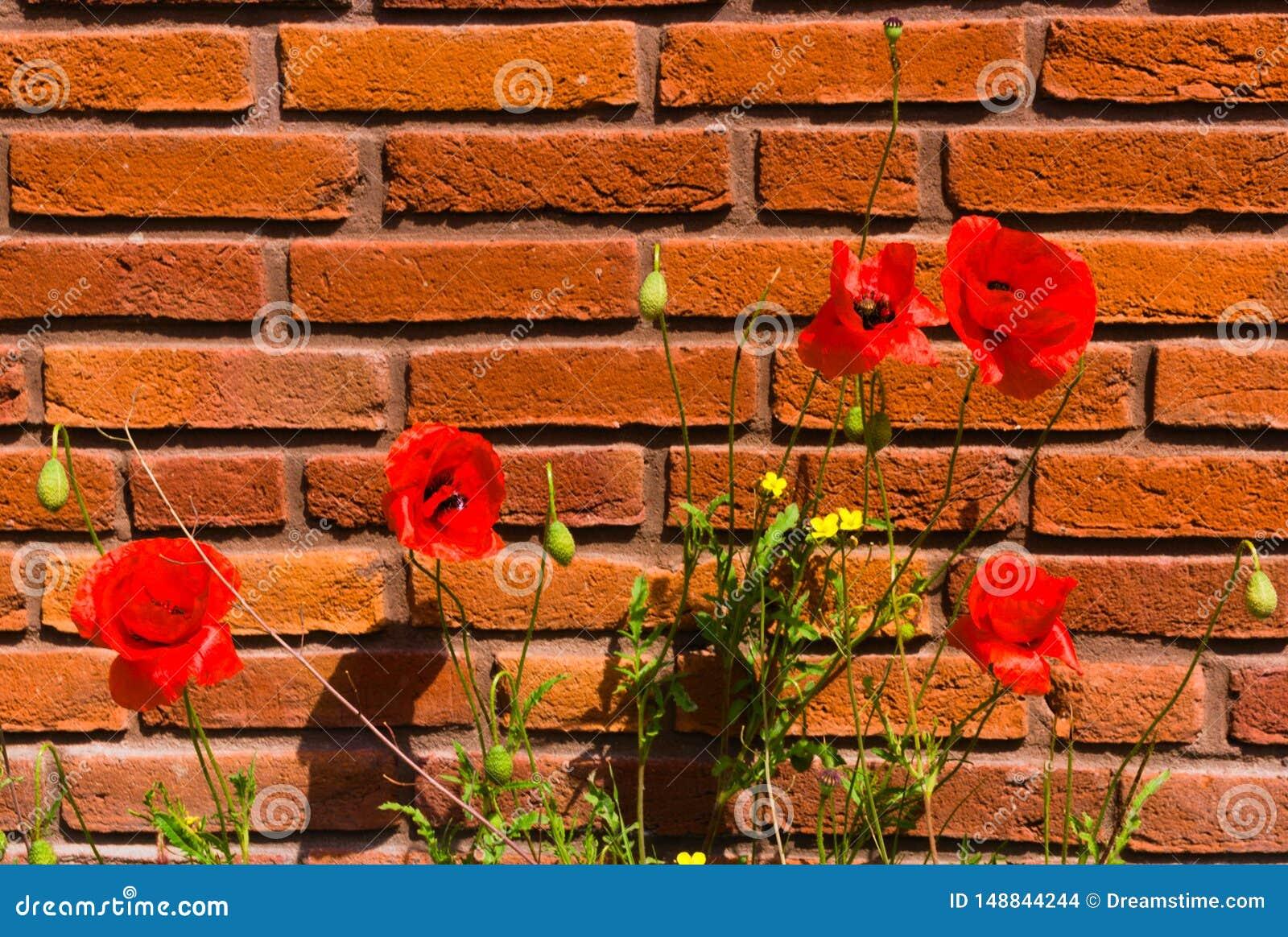 F?rst blomma av blommor i v?r