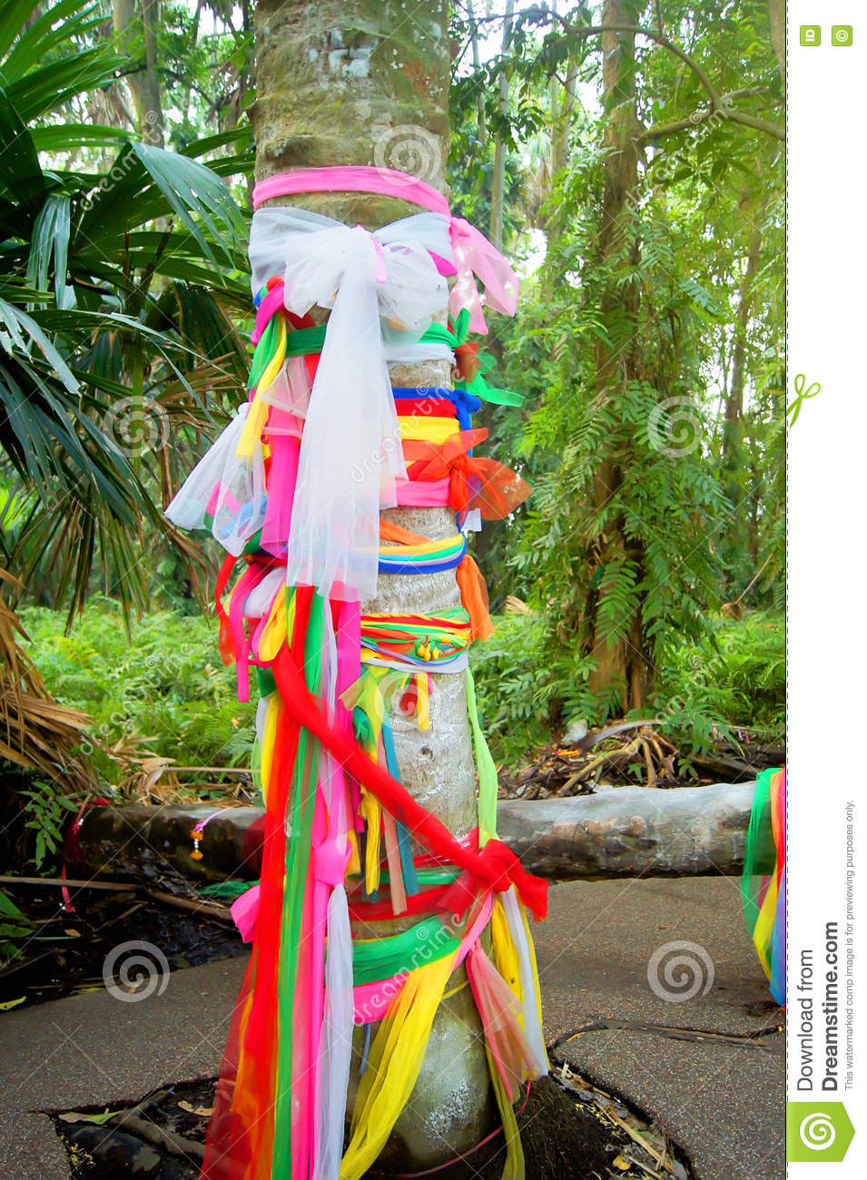 The Fabric, Color Variety Tied To Trees. To Worship According To ...