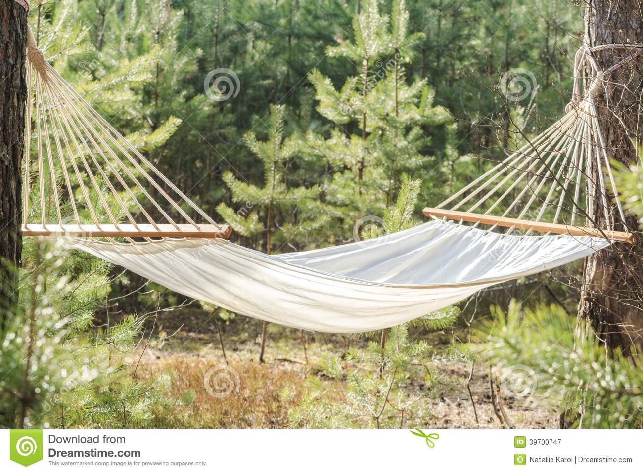 fabric hammock strung between two pines in forest stock