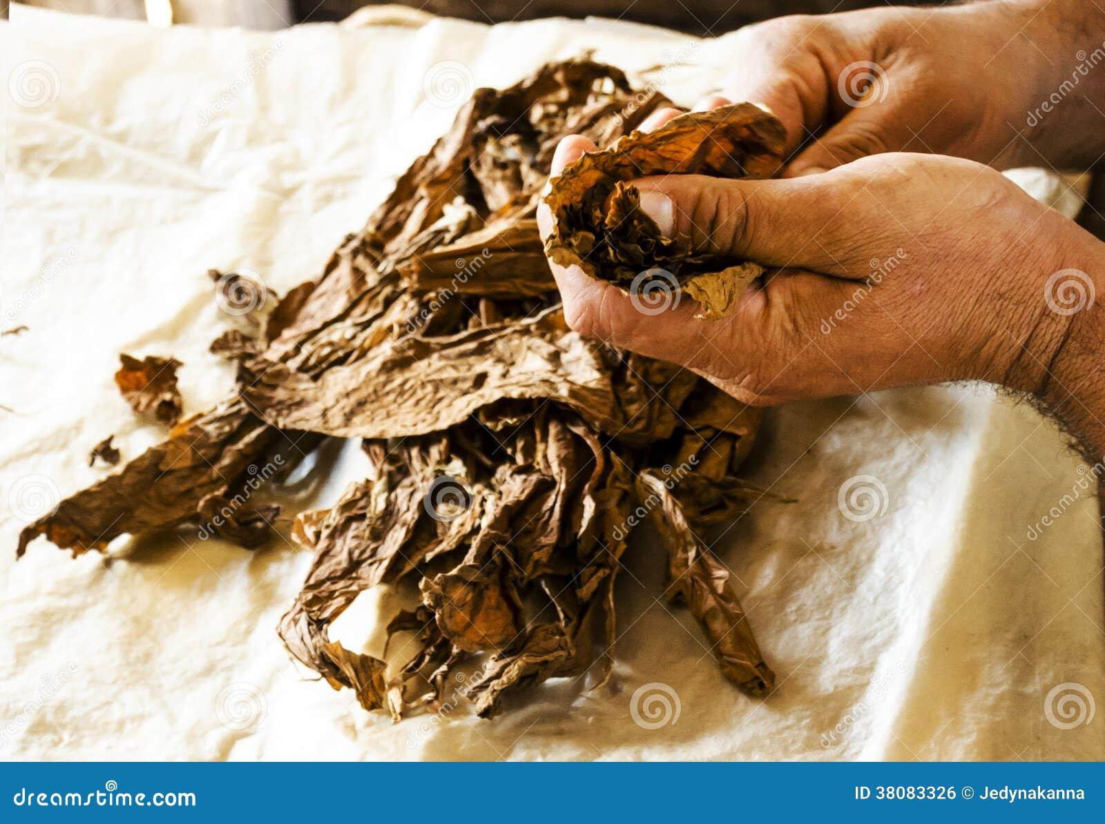 Fabricación tradicional de cigarros cubanos en Cuba