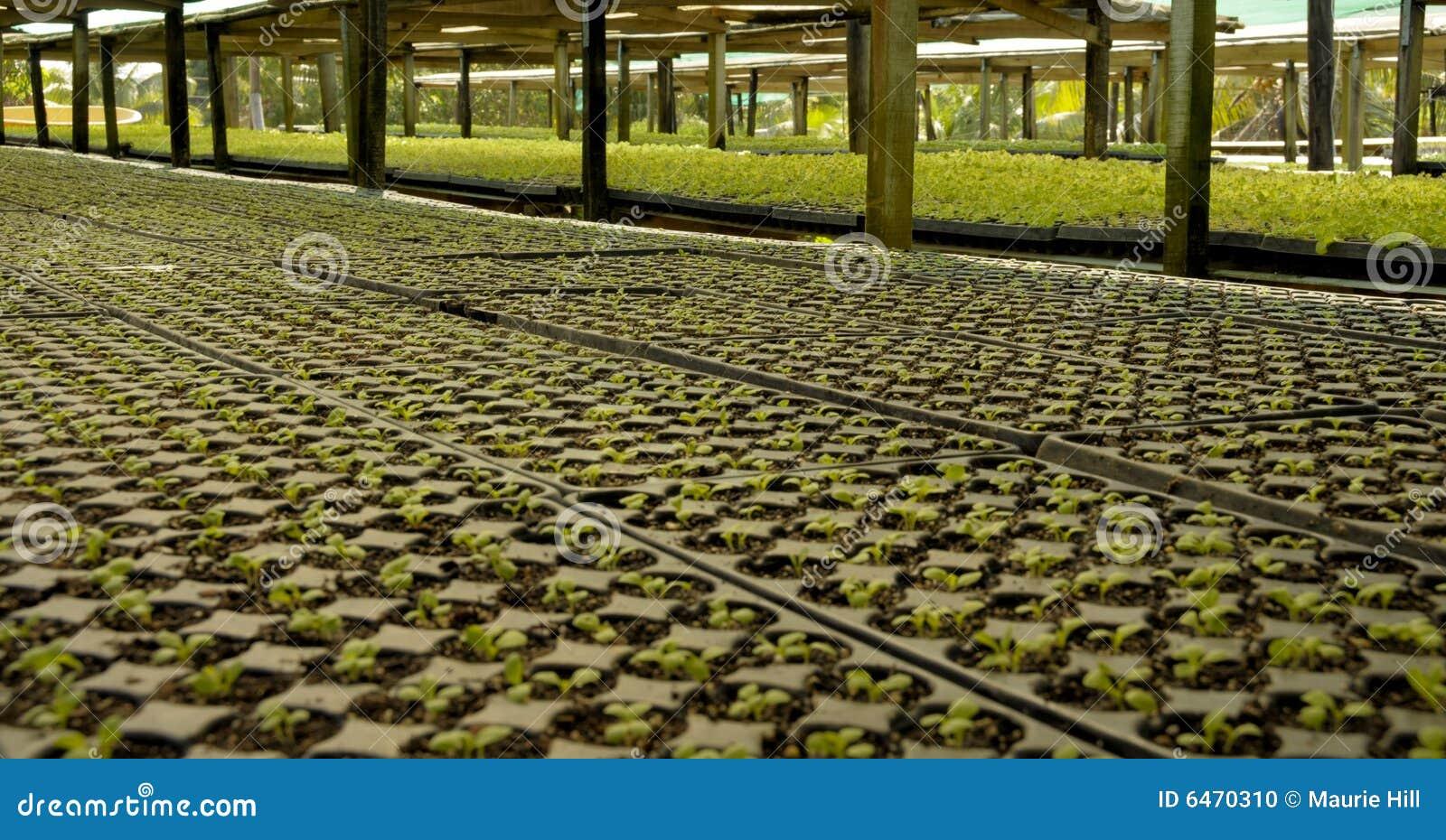 Fabryka zioła