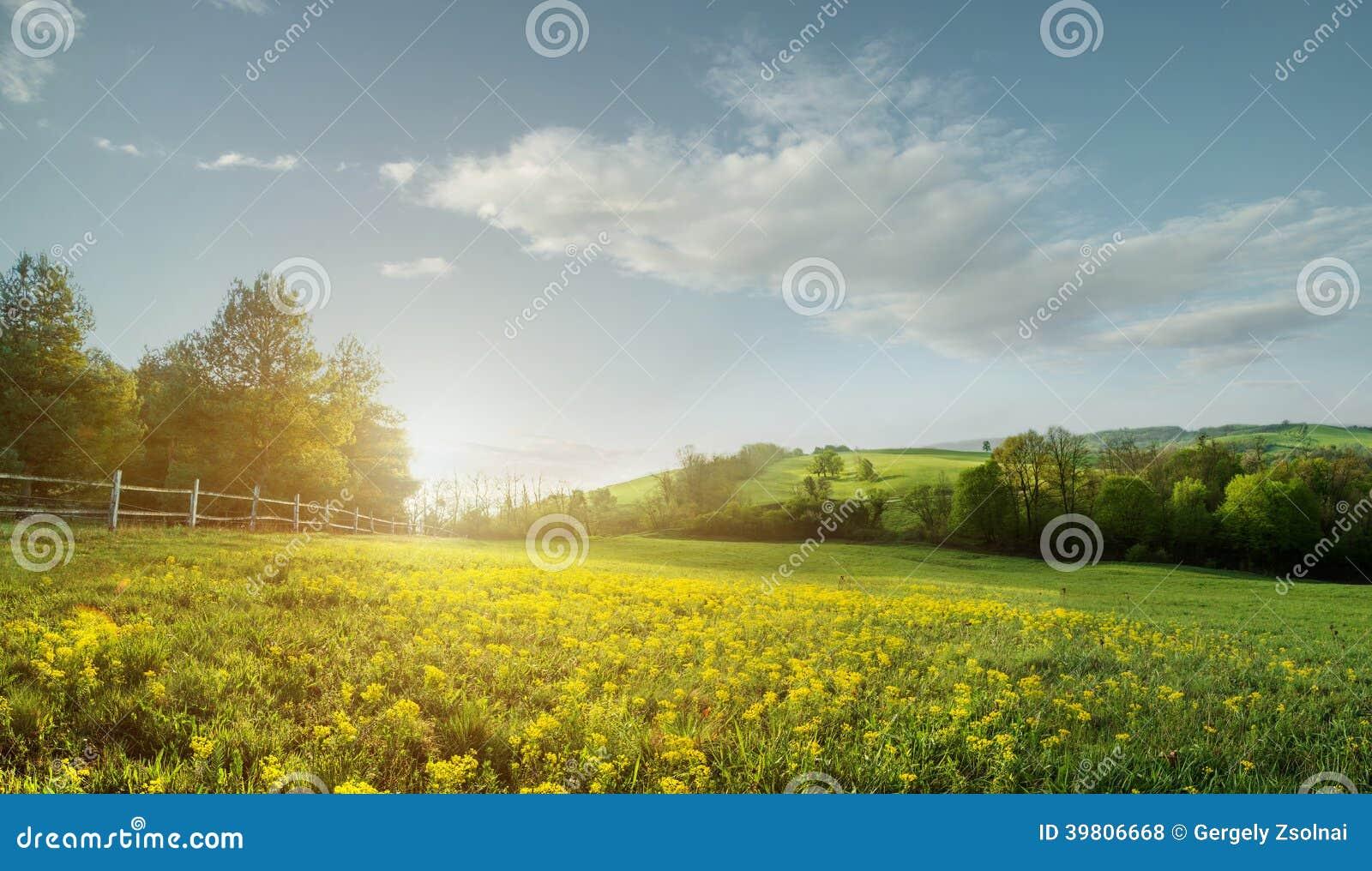 beautiful yellow field landscape - photo #25