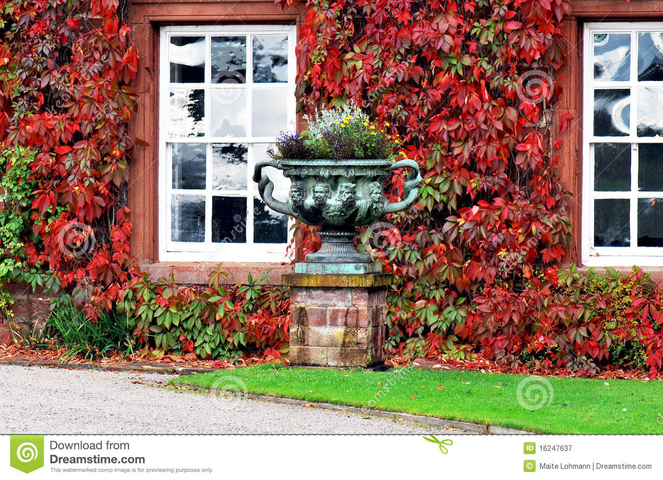 Facade With Colourful Climbing Plants Royalty Free Stock