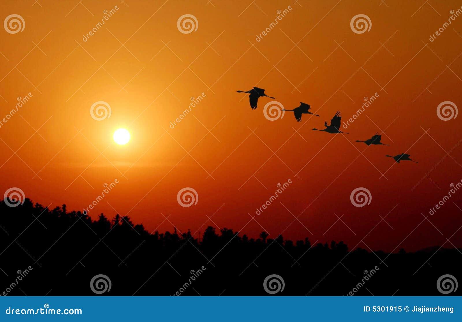 Download Faccia Lo Sforzo Concordato Immagine Stock - Immagine di foresta, animali: 5301915