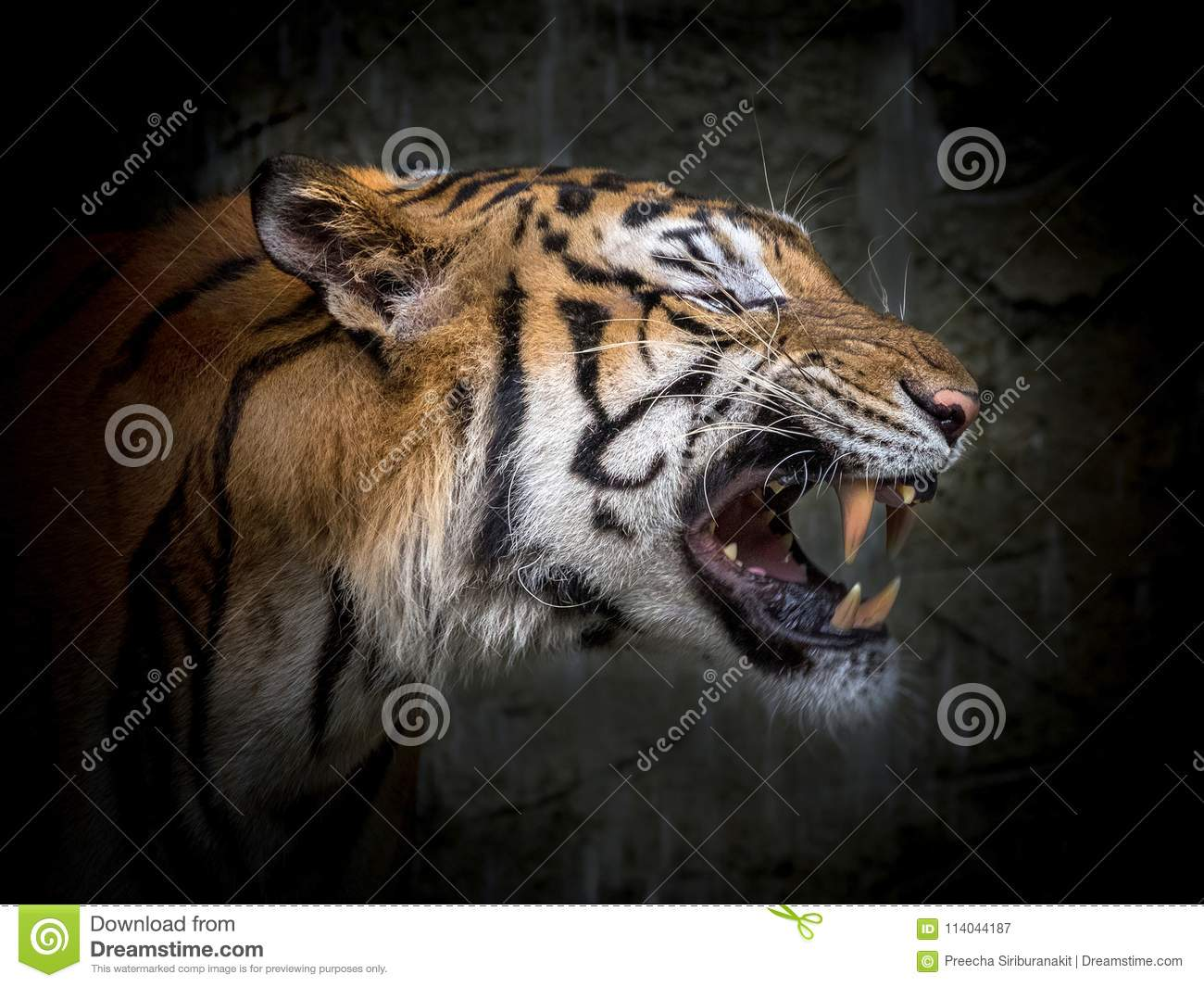The face of Asian tiger.