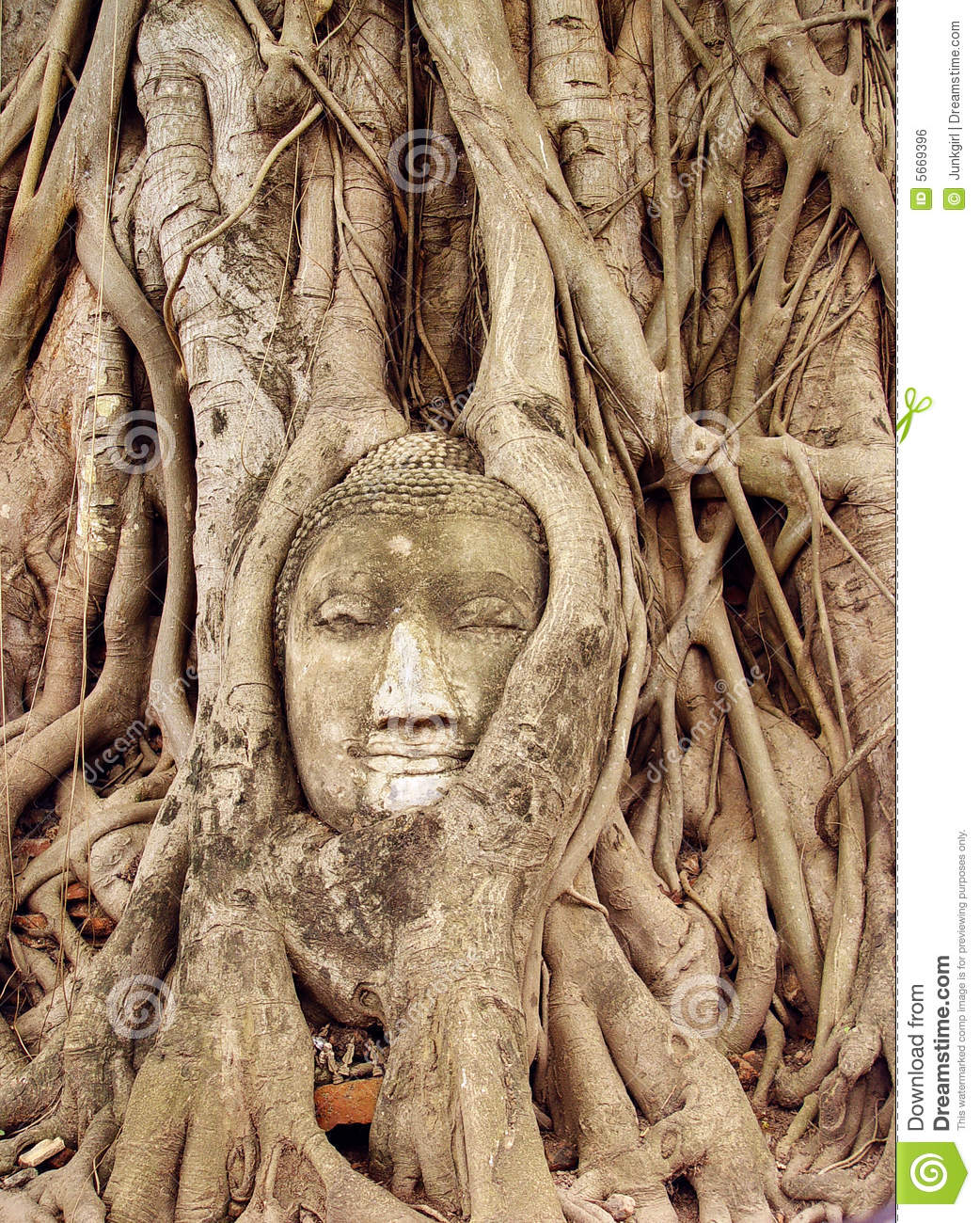 Face Carved In Tree Royalty Free Stock Image - Image: 5669396