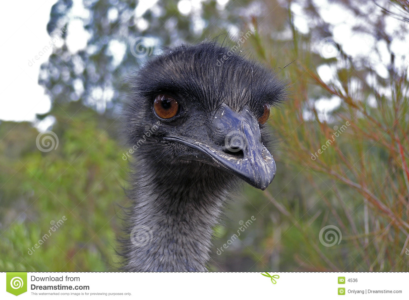 Face do Emu