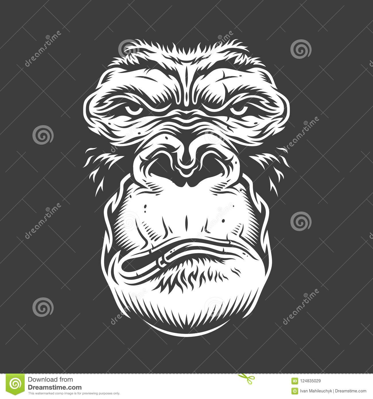 f57340c82 Face Of Gorilla Isolated On White Stock Vector - Illustration of ...