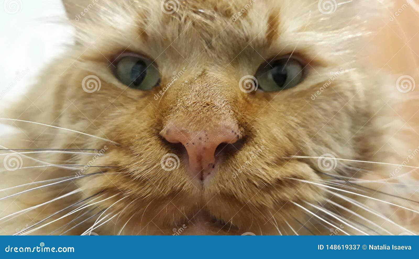 Cat muzzle close up