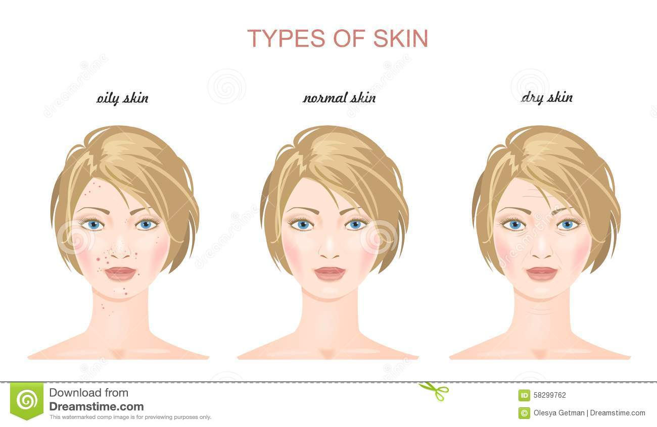 Face Skin Types Vector Stock Vector Image 58299762