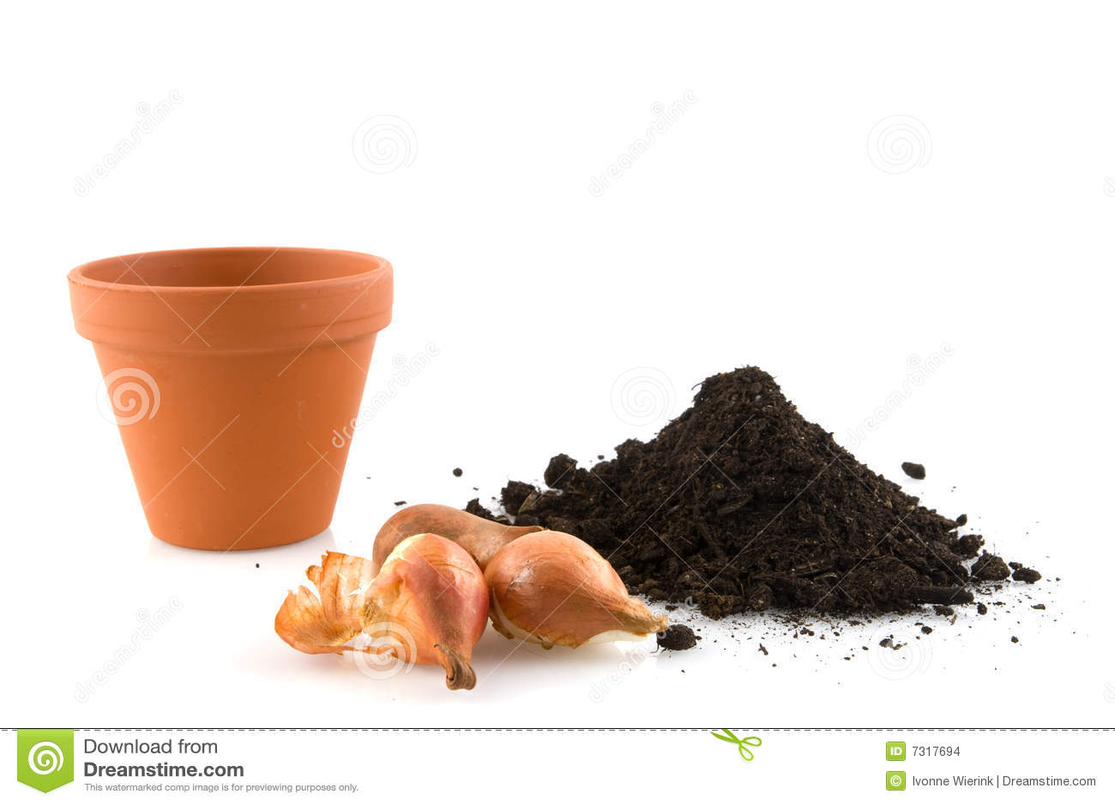 Facendo il giardinaggio con i flowerbulbs