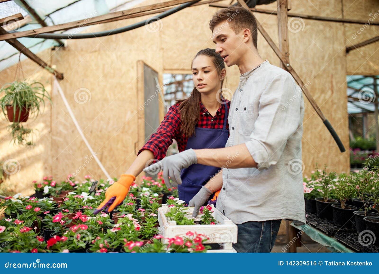 Faceta i dziewczyny ogrodniczki wybierają garnki z kwiat rozsadami w szklarni na słonecznym dniu