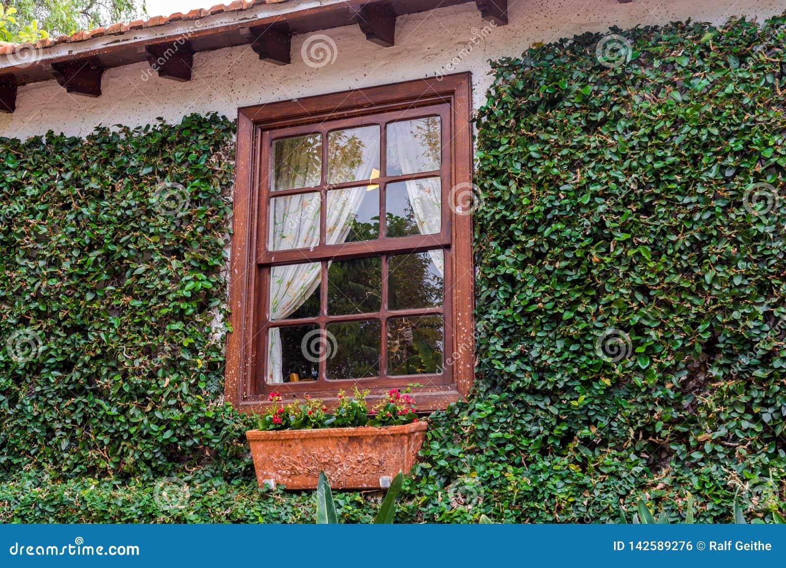 Fachada verde fuerte de una casa rústica con las ventanas en marco de madera