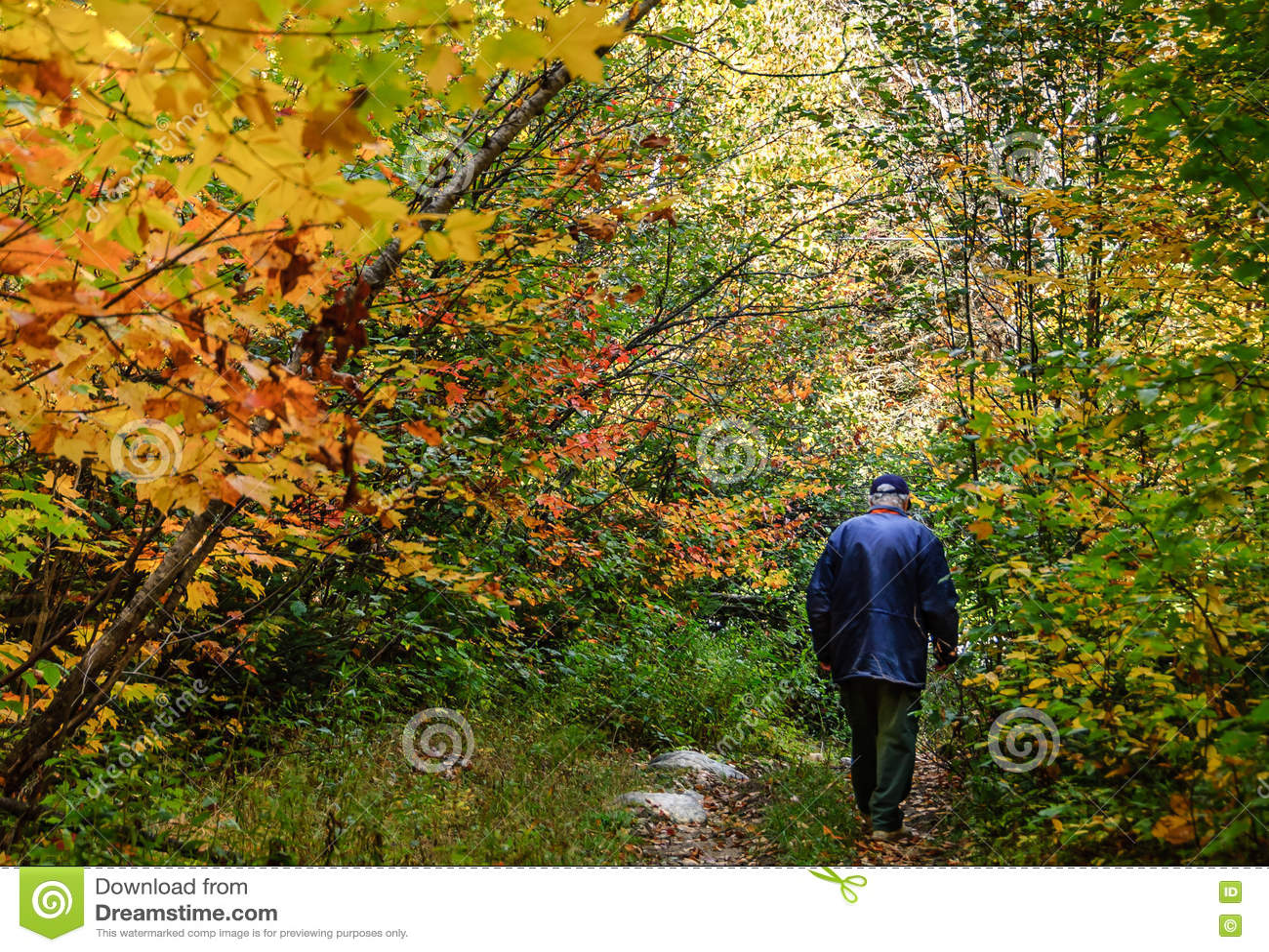 Fada do outono com passeio superior na floresta