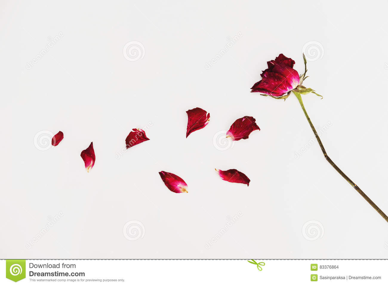 Faded Blowing Rose Flowers Petals On White Background Stock Photo