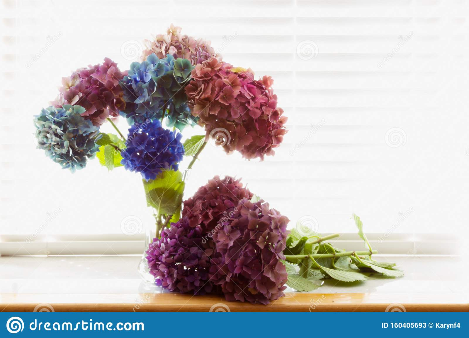 Bouquet Of Antique Hydrangea Flowers At The End Of The Summer Stock Image Image Of Fall Interior 160405693