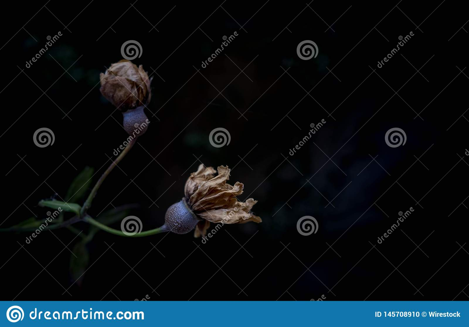 A depressing sere flower branch with dark background