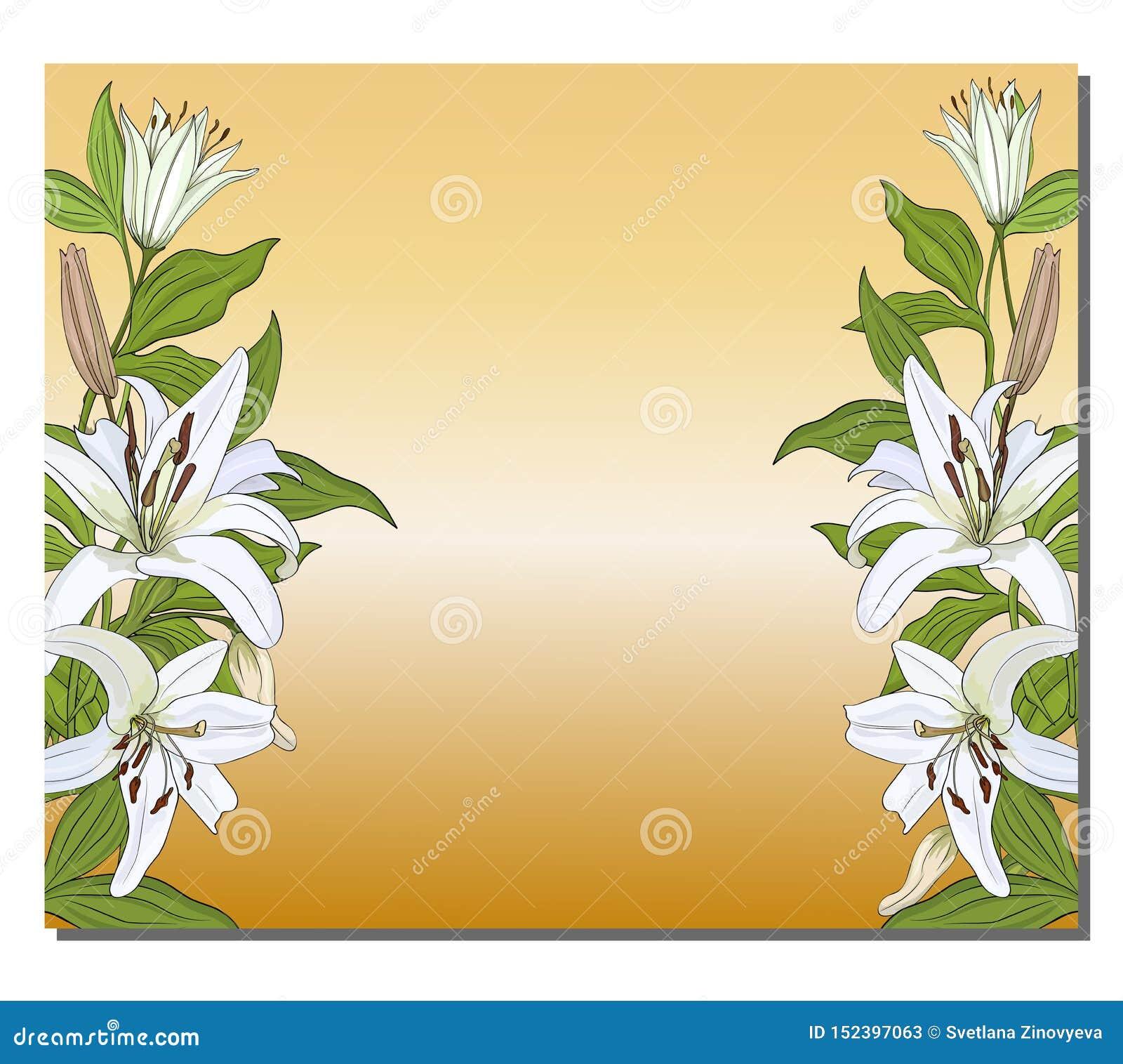 Fahne mit einer vertikalen Grenze von weißen Lilien auf einem Goldhintergrund Vektor