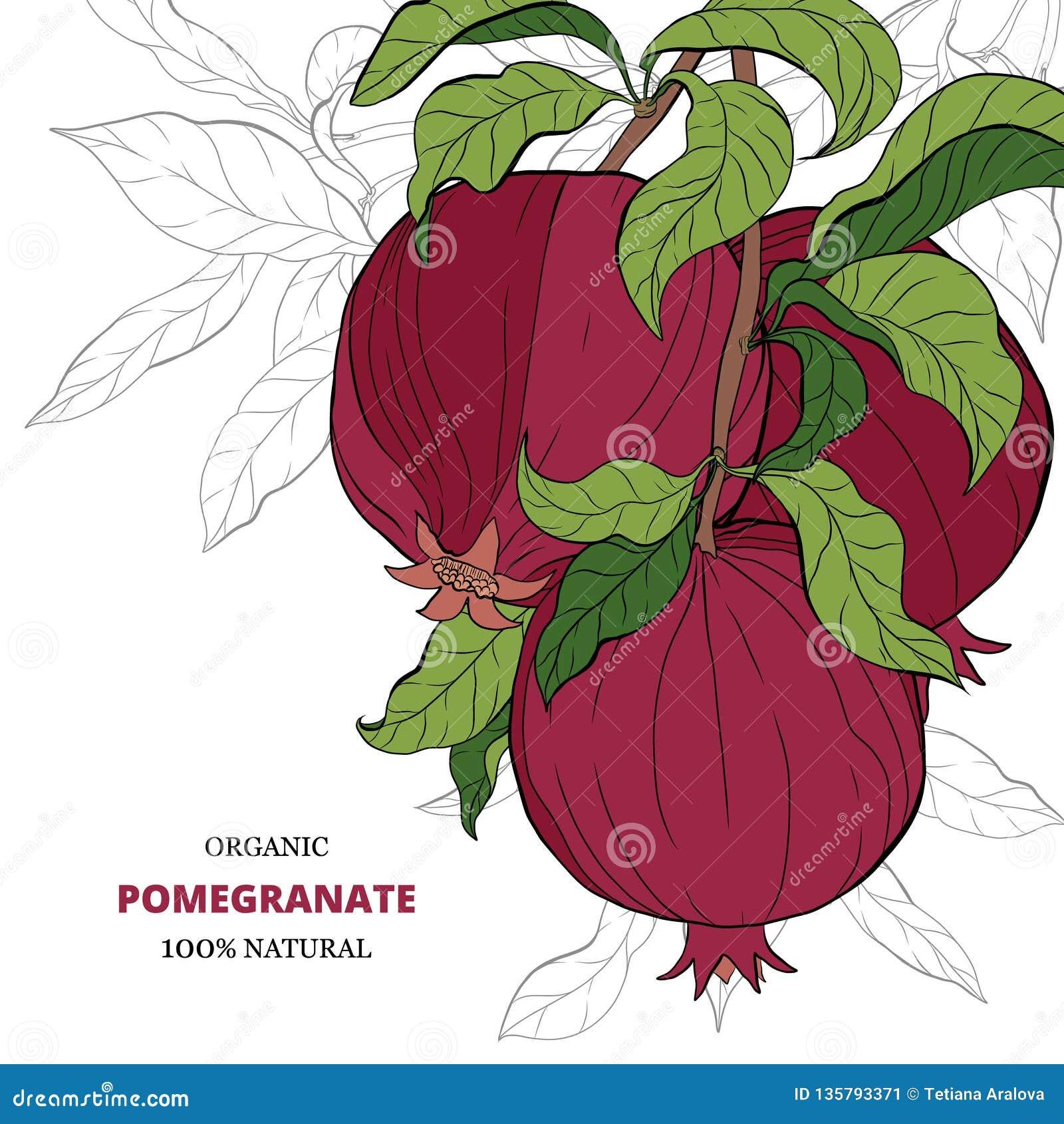 Fahnen mit Granatapfelfrüchten auf weißem Hintergrund