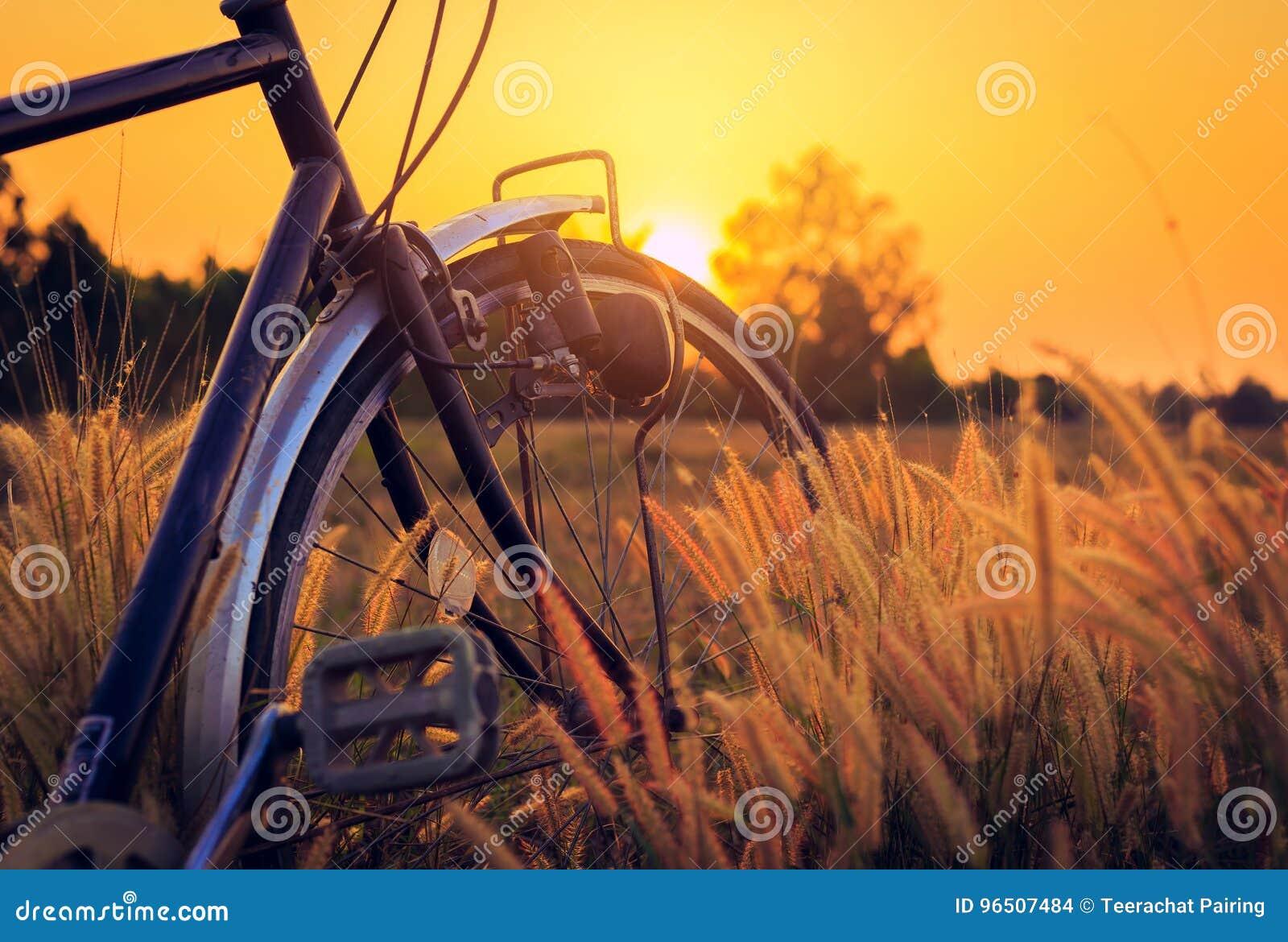 Fahrrad bei Sonnenuntergang im Park
