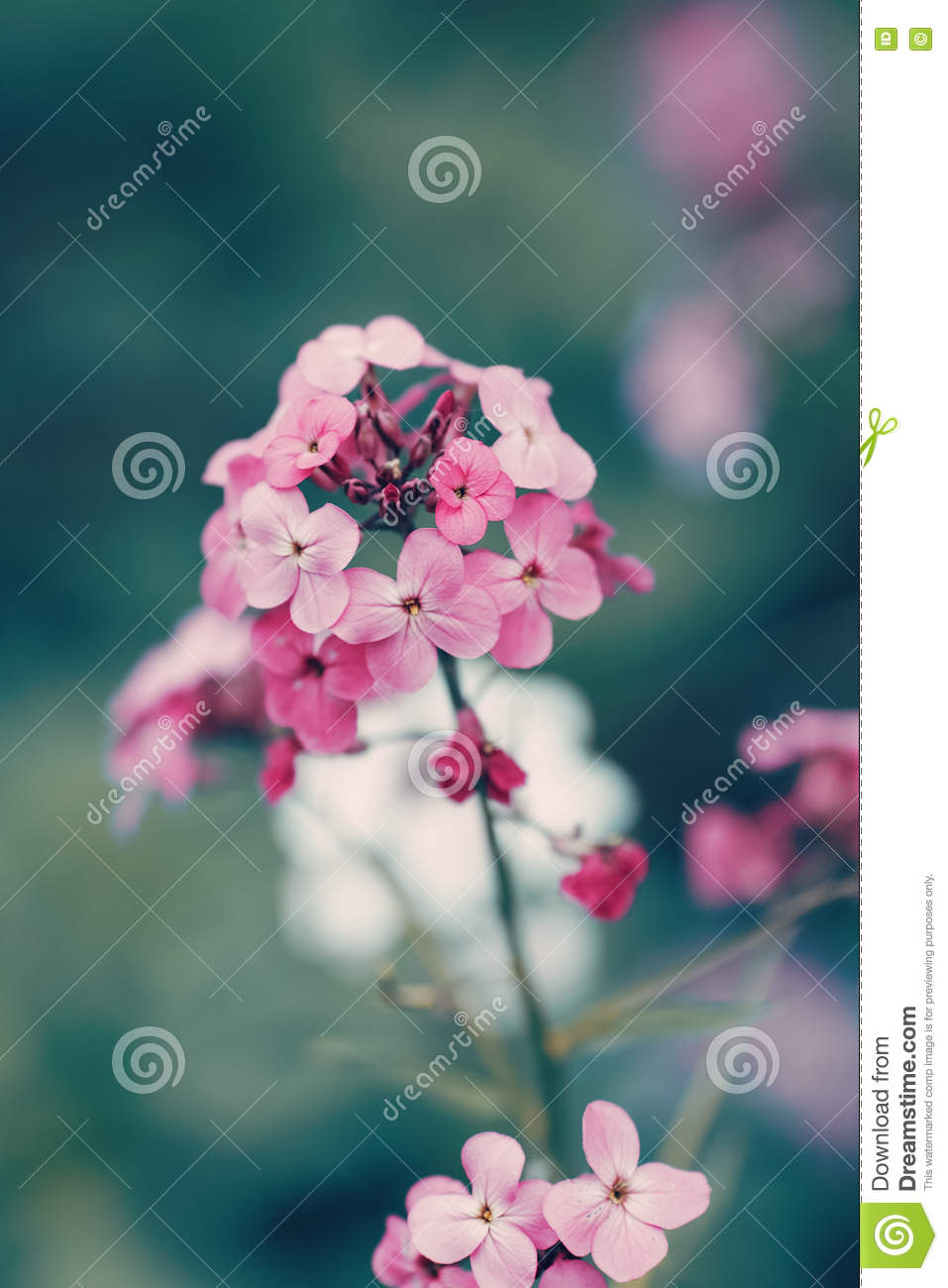 fairy dreamy magic red pink flowers with dark green blue