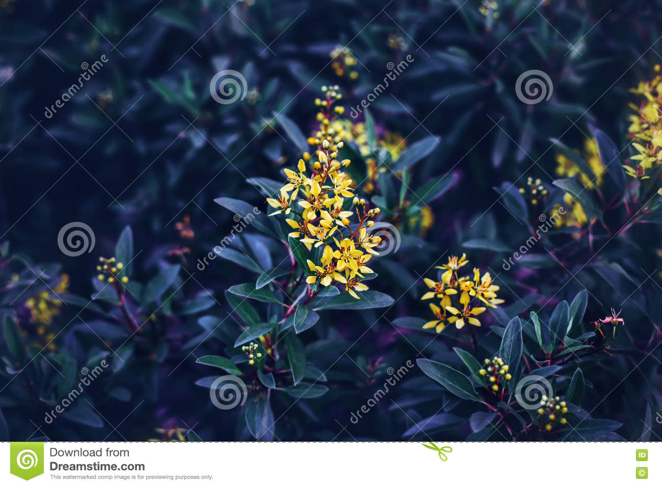 Fairy Dreamy Magic Yellow Flowers With Dark Green Blue Purple Leaves