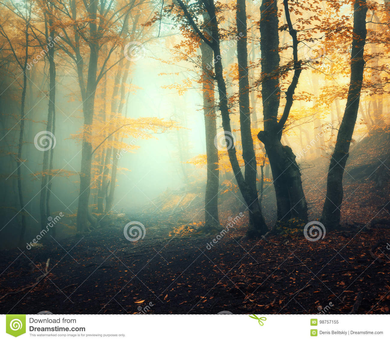 Fairy Forest In Fog Fall Woods Enchanted Autumn The Evening Old Tree Landscape With Trees Colorful Orange Foliage And Green