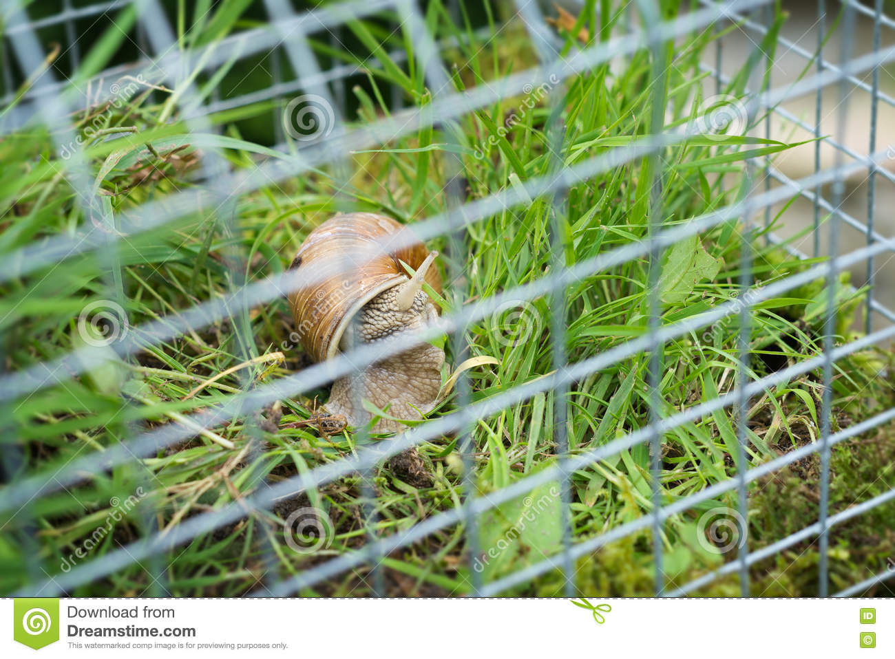 Download Fairy House Garden Decoration Hanging Wire Cage, Moss, Mushroom,  Snail Stock Illustration