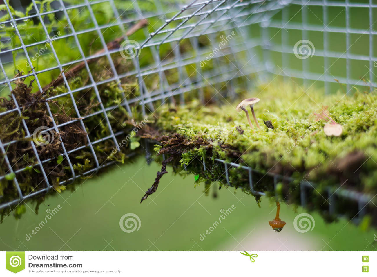 Fairy House Garden Decoration Hanging Wire Cage, Moss, Mushroom ...