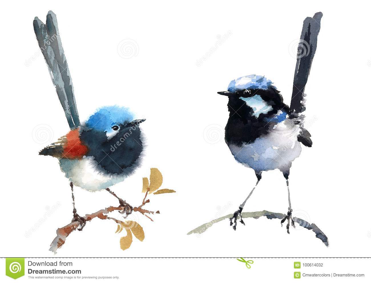Fairy Wrens Birds Watercolor Illustration Set Hand Drawn