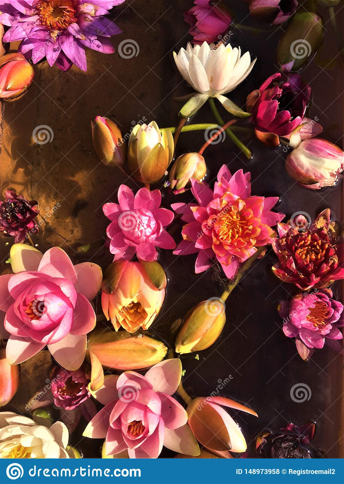 Fairytale, magic, spring, fragrance, colours, pattern and flower `s soul
