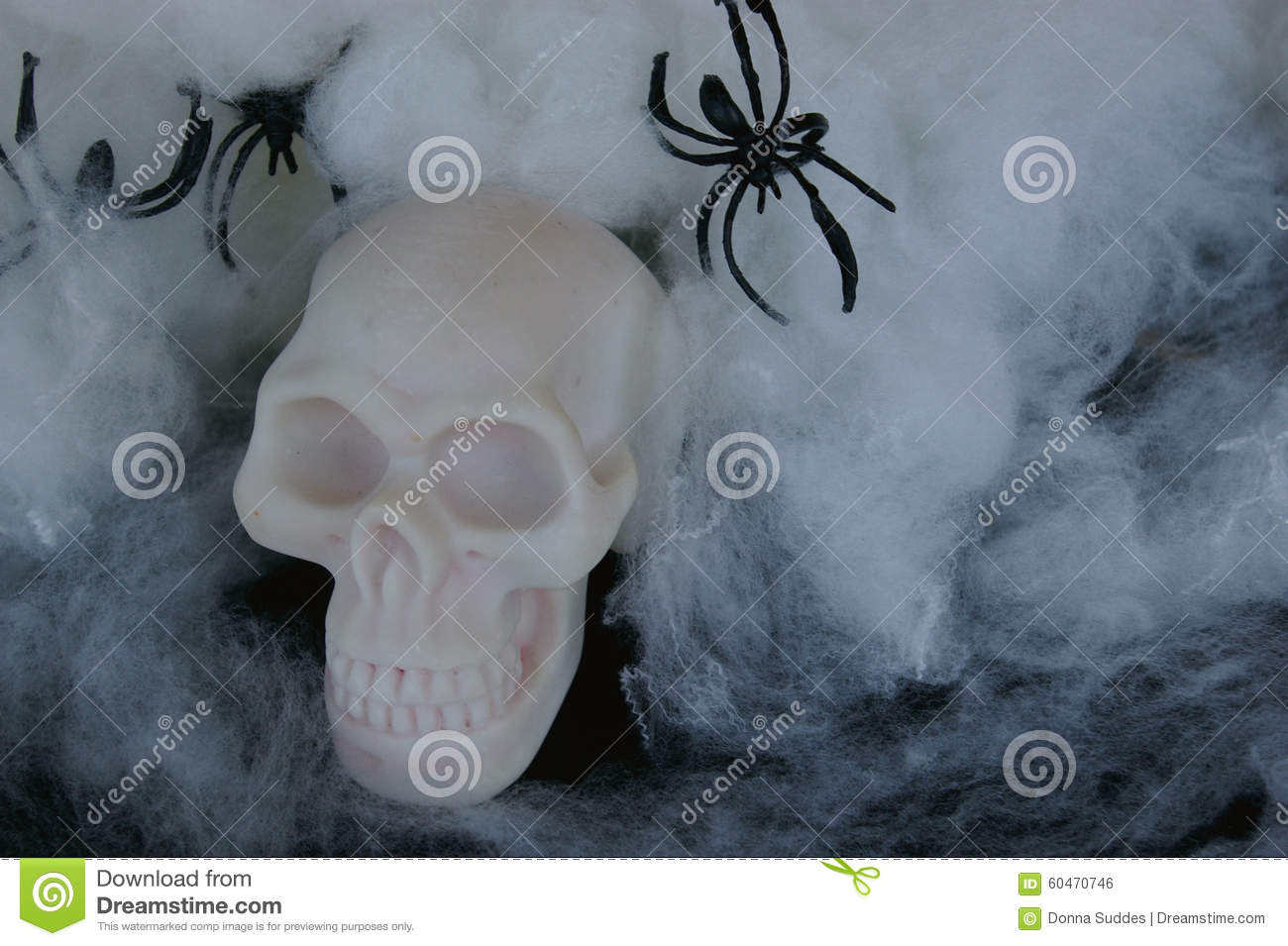 Fake Skull With Fake Spider Webs Around It Stock Photo Image Of