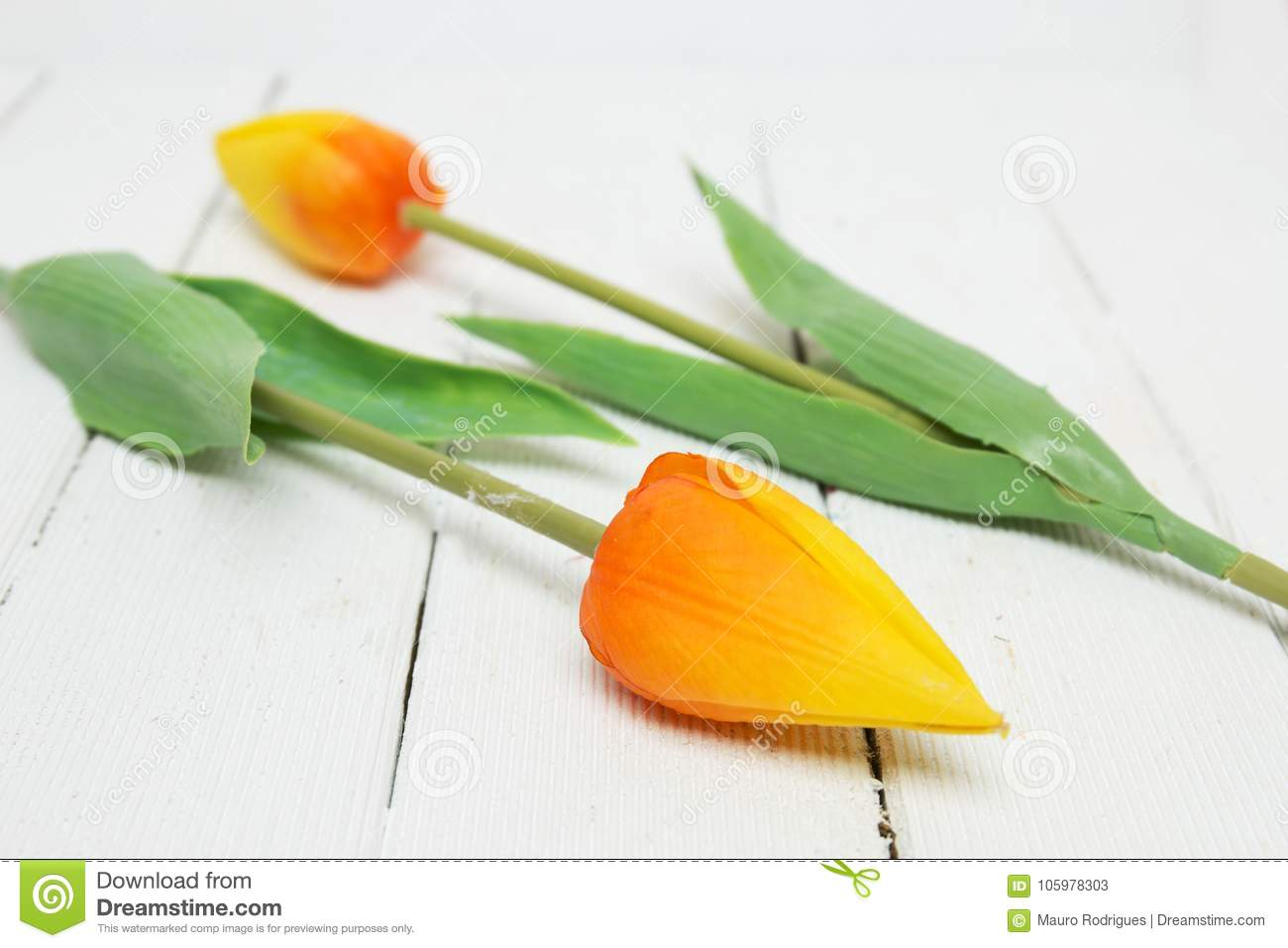 Fake yellow tulip flowers isolated on a white background stock close view of fake yellow tulip flowers isolated on a white wooden background mightylinksfo